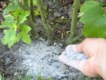 Utiliser les cendres au jardin