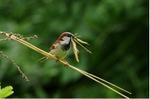 24 et 25 mai : rendez-vous au jardin pour compter les oiseaux !