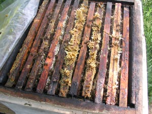 Transhumance des ruches