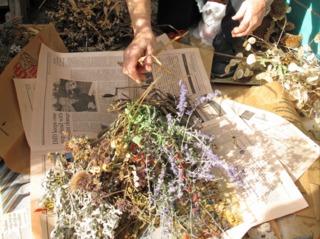 Cueillette de fleurs séchées pour bouquets secs