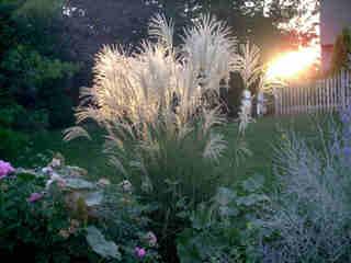 Quelle graminée pour mon jardin ?
