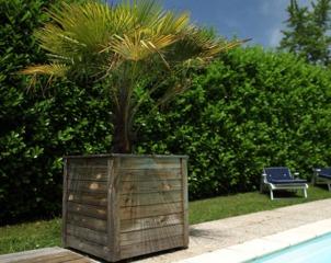 Palmier en bac au bord d'une piscine
