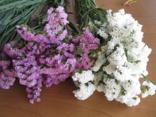 Statice pour bouquets secs