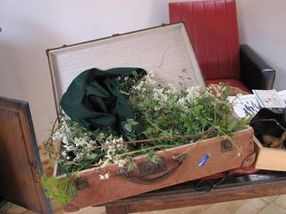 Plantes dans une valise