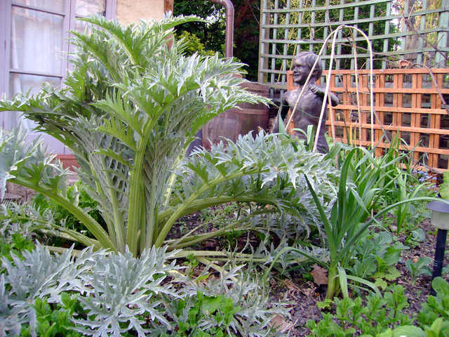 Artichaut plante tout for Plante ornementale jardin