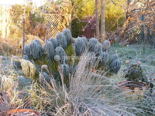 Les plantes qui ne se taillent pas en hiver