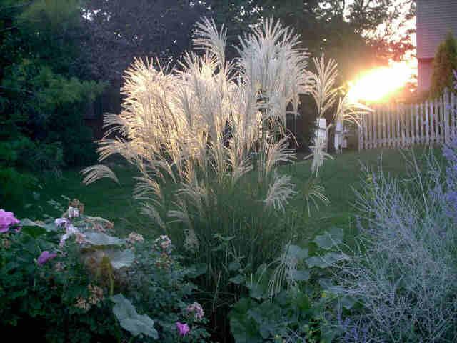Les gramin es for Plante decorative jardin