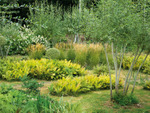 Prix du Jardin de l'Année : un concours pour les amateurs de jardins