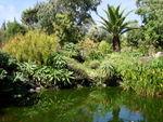 Diaporama : Envie d'exotisme au jardin ?
