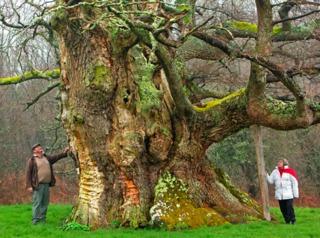 Chêne de Saint-Civran - Arbre de l'Année 2013