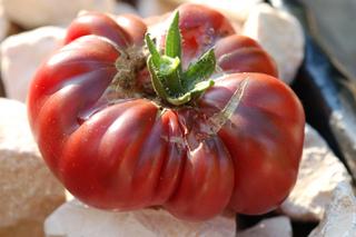 Eclatement des tomates : causes, comment l'éviter
