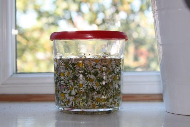 Préparation d'huile de calendula, millepertuis, arnica : macérâts huileux maison