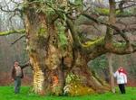 Votez pour l'arbre de l'année 2014 avant le 31 août