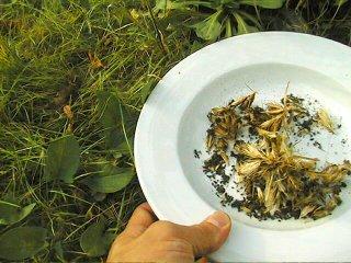 Graines du jardin dans une assiette