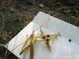 Récupération de graines dans une enveloppe