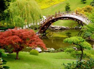 Niwakis (érable du Japon, saule)