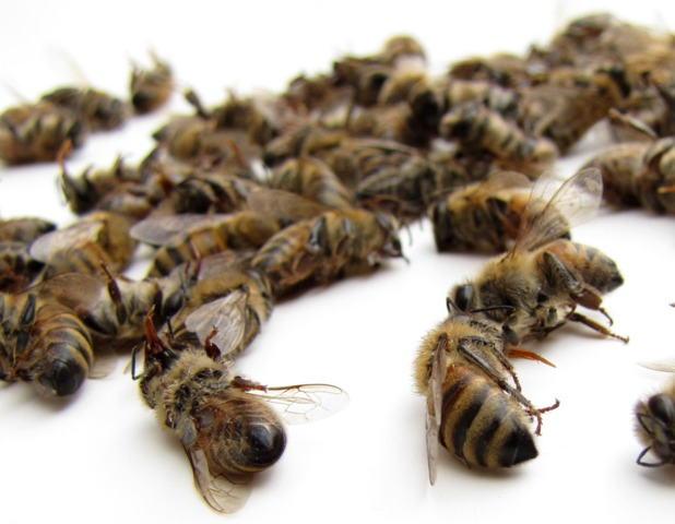 Monsanto investit dans la protection des abeilles