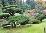 Le niwaki, arbre emblématique du jardin zen japonais