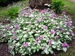 Choisir les plantes couvre-sol