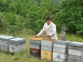 Entretien des ruches par l'apiculteur