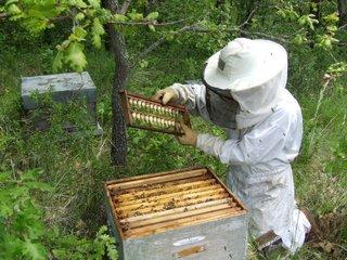 Apiculteur ouvrant une ruche