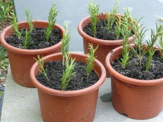 Calendrier du bouturage des plantes à fleurs ou à feuillage