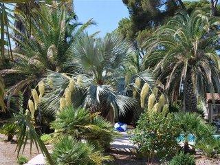 Un jardin de palmiers