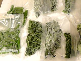 Congélation des haricots verts
