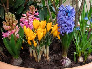 Un printemps fleuri - Les floraisons printanières
