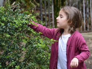 Sondage : les Français connaissent mal la botanique