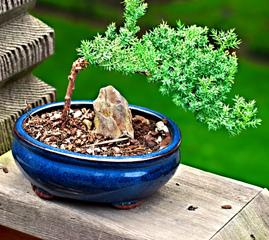 Sable rivi re tout - Comment faire un bonsai ...
