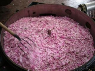 Extraction des substances aromatiques de pétales de rose