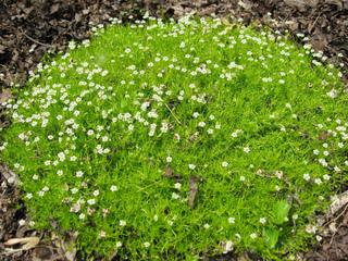 Coussin fleuri de sagine