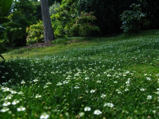Sagine dans un jardin japonais