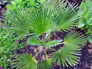 Des plantes exotiques originales et rustiques