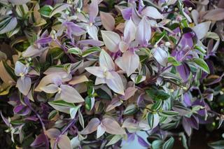 Ombre, peu d'entretien : plantes d'intérieur increvables
