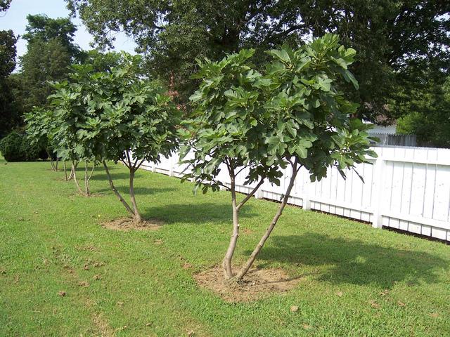 quand planter les best les fougres sont des plantes dombre et de sol frais magnifique feuillage. Black Bedroom Furniture Sets. Home Design Ideas
