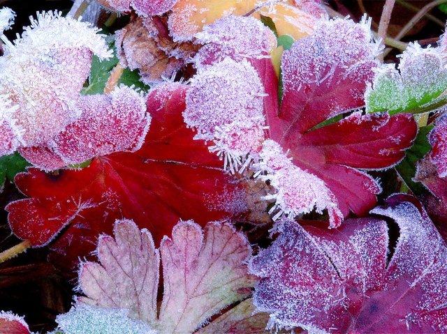4 saisons de rouge au jardin : fleurs, feuilles, écorces, baies...