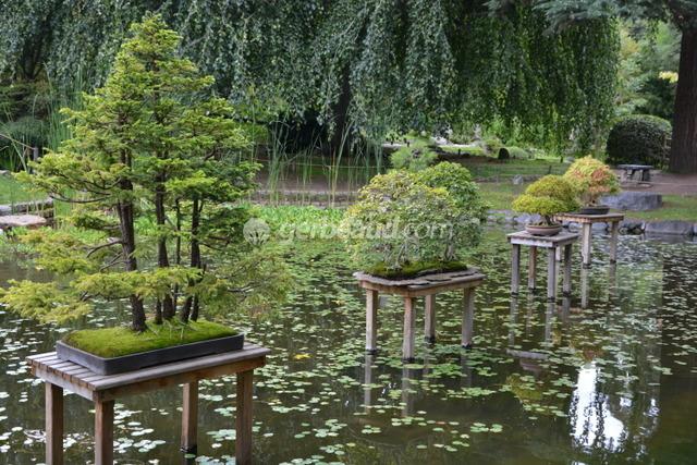 Jardin japonais d couverte caract ristiques et v g taux for Plan de petit jardin japonais