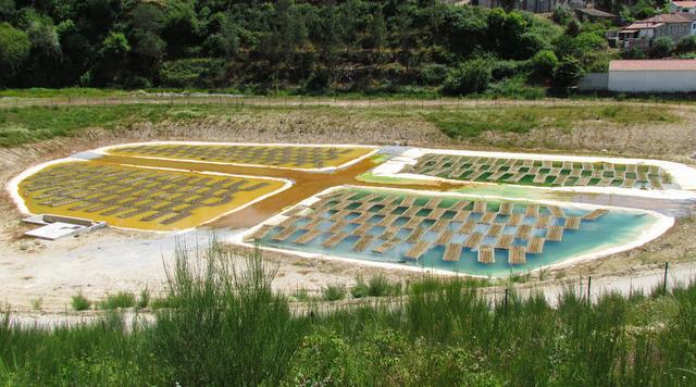 Phytoremédiation : utilisation des plantes pour dépolluer les sols et les eaux