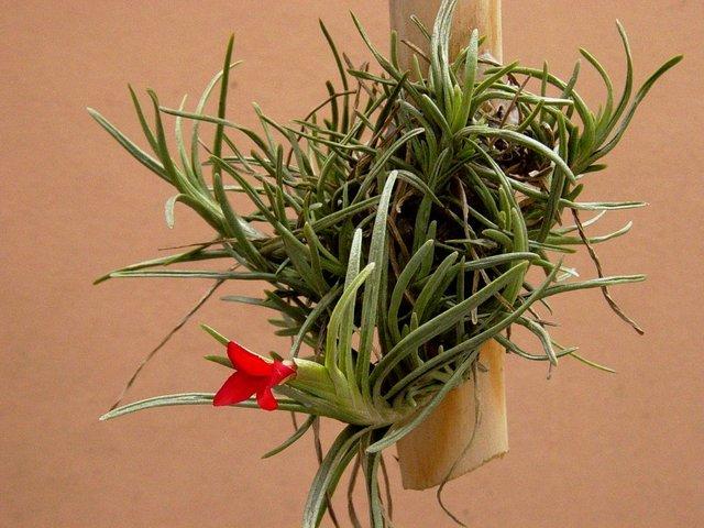 Plante D Interieur Sans Lumiere