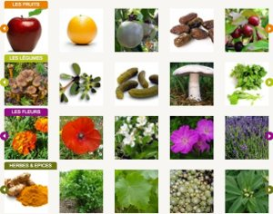 Académie du Fruit et Légume