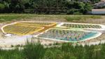 La phytoremédiation, ou comment les plantes dépolluent sols et eaux