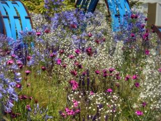 Agapanthes et plantes vivaces fleuries