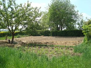 Un arbre au potager : entre jardin-forêt et agroforesterie
