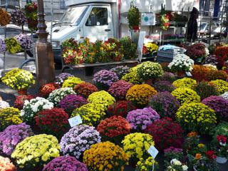 Chrysanthèmes vendus à la Toussaint