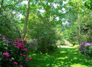Hortensias à l'ombre des arbres