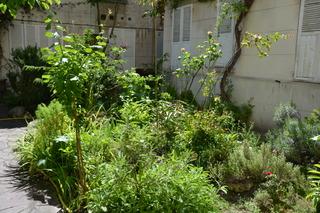 Petit jardin de copropriété - Cour intérieure