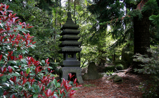 Photinia dans un jardin japonais