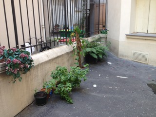 Quelques pots dans une cour d'immeuble